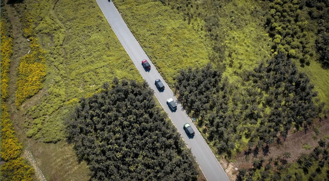 近可上班代步,远可郊野撒欢 选哪辆车才不负春光?